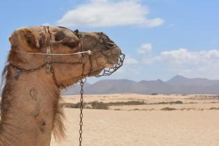 Kameel rijden in Egypte