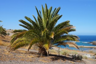 Vakantie naar Canarische Eilanden - Tenerife