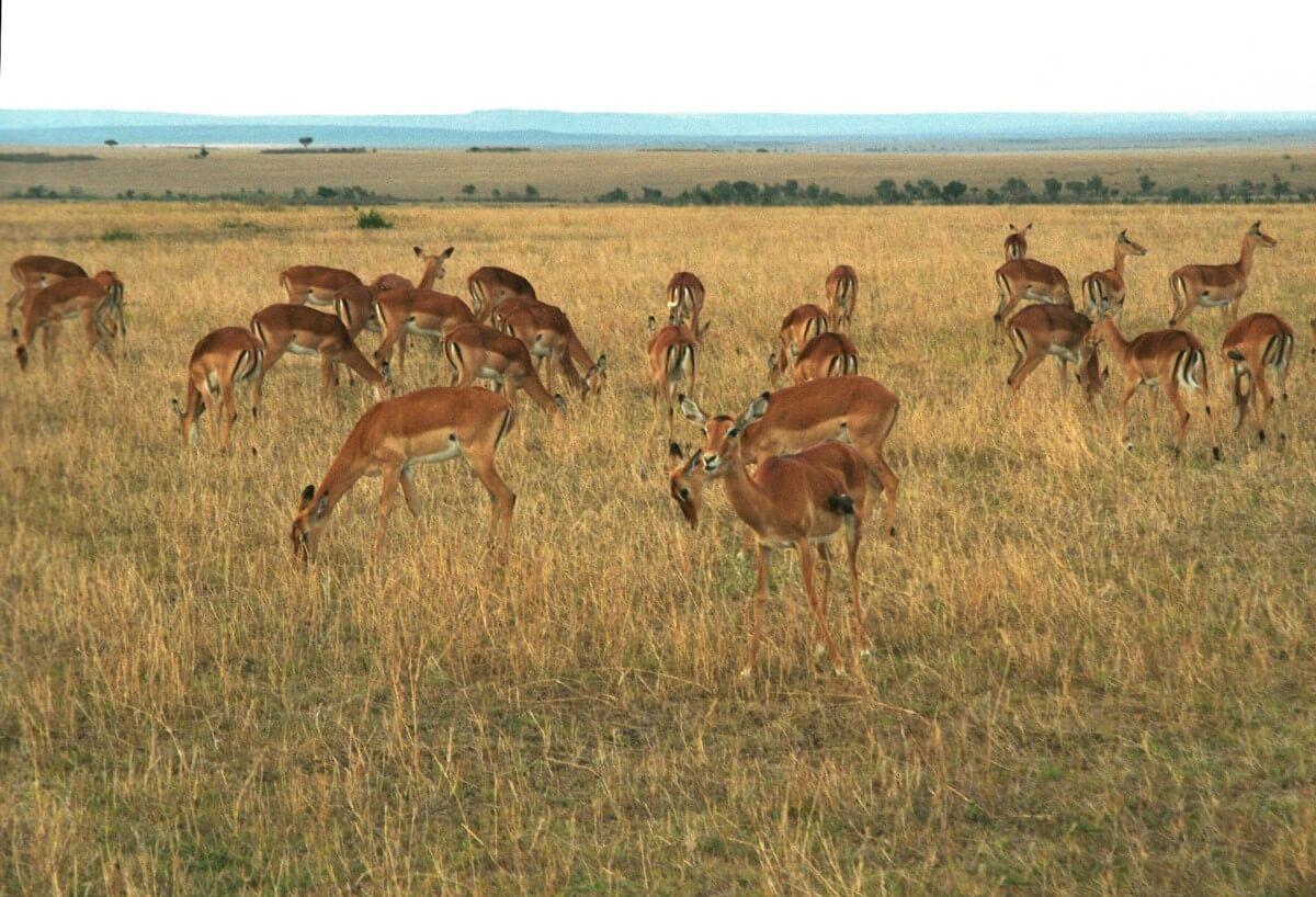 Vakantie in Kenia