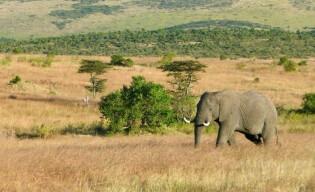 Kenia Masai Mara