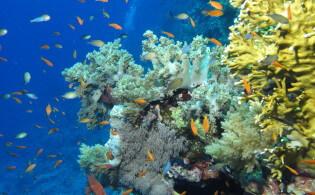 Duikvakantie in de Rode Zee