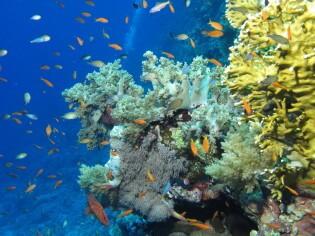 Duikvakantie Rode Zee, Egypte