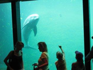 Dolfijnen Dolfinarium