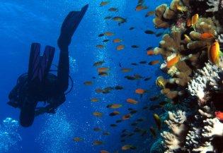 Duiken bij de Rode Zee