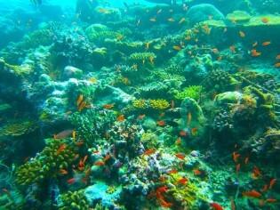 Maladives, Diving, Beautiful environment