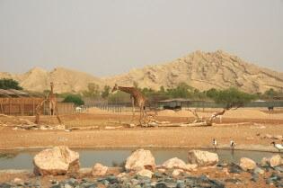 Al Ain Zoo, Abu Dhabi