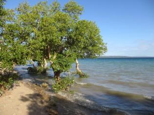 Mangrove op Pemba, Tanzania
