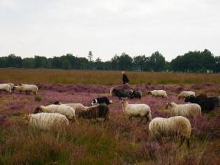 Vakantie in Drenthe - Natuur