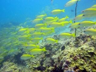 Onderwaterwereld van Zanzibar, Tanzania