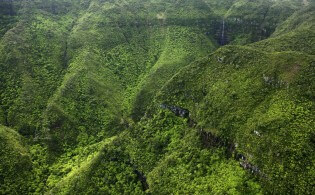 Black River Gorges National Park