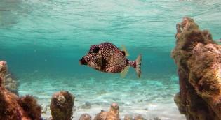 Onderwaterwereld in Lac Bay, Bonaire