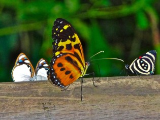Vlinders en prachtige natuur van Iguazú