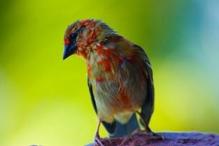 Vogels op de Seychellen