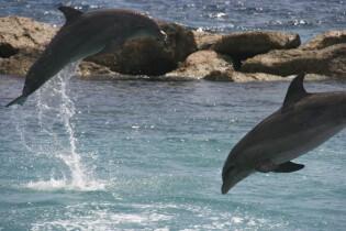 Wat te doen op Curaçao - Sea Aquarium