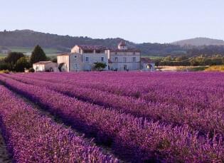 Lavendelvelden in Frankrijk