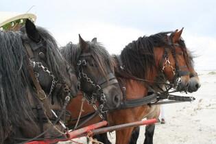Paardrijden op schiermonnikoog