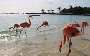 Wat je niet mag missen op Aruba