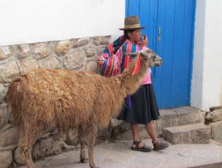 Rondreizen Bolivia, backpacken, Inca, Lama