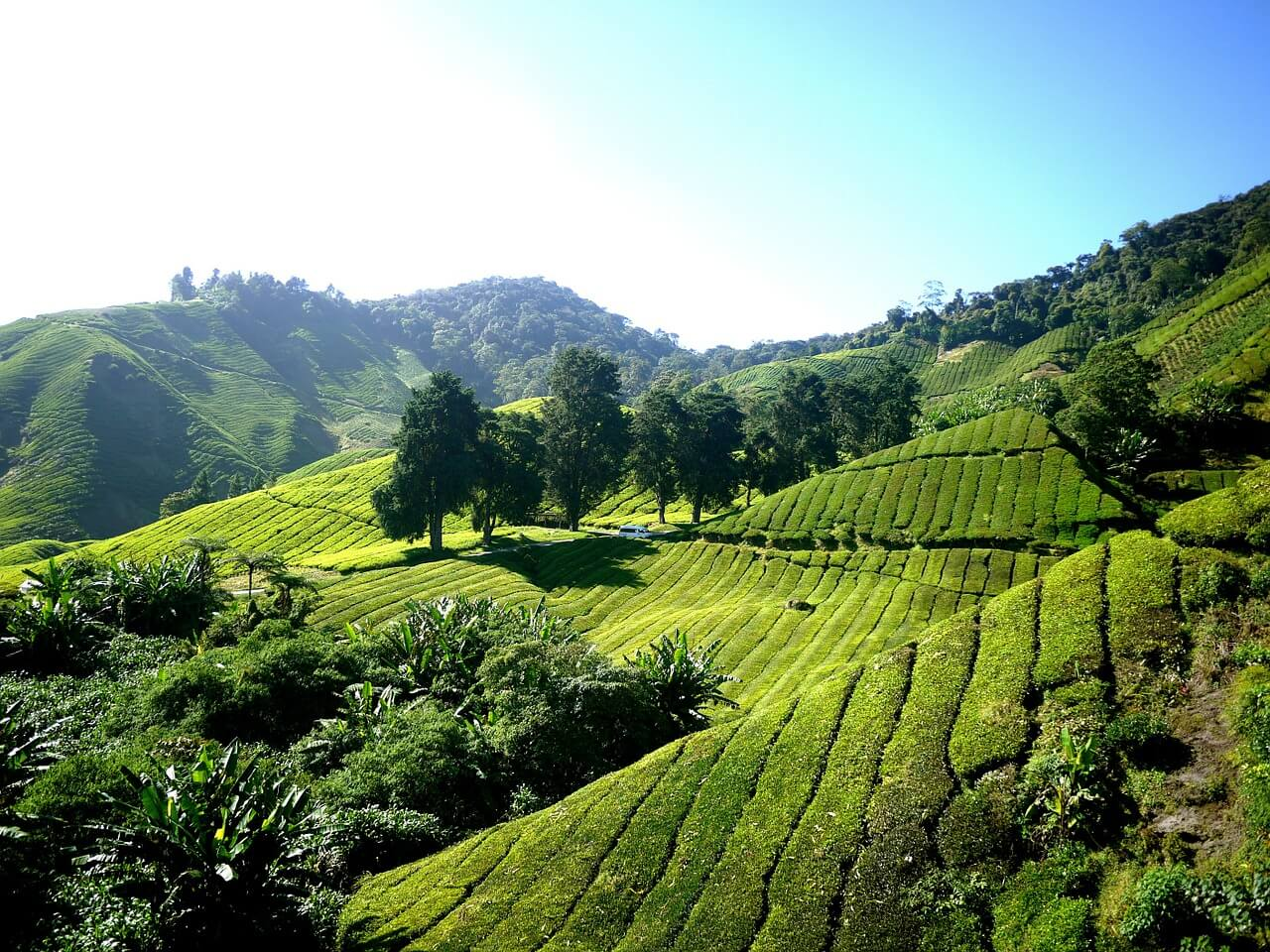 Bezoek Cameron Highlands – Maleisië