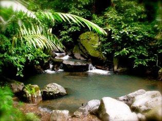 Saint Lucia mangrove