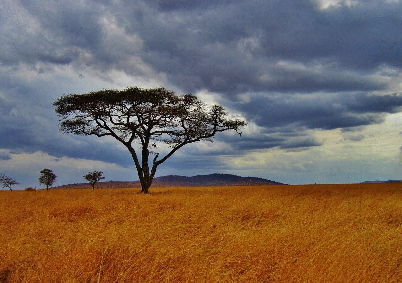 Natuur in Tanzania