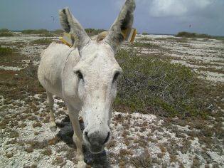 Washington Slagbaai Reservaat Bonaire