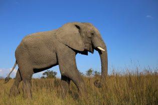 Zimbabwe Safari