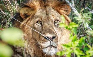 5 redenen om Zuid-Afrika te bezoeken