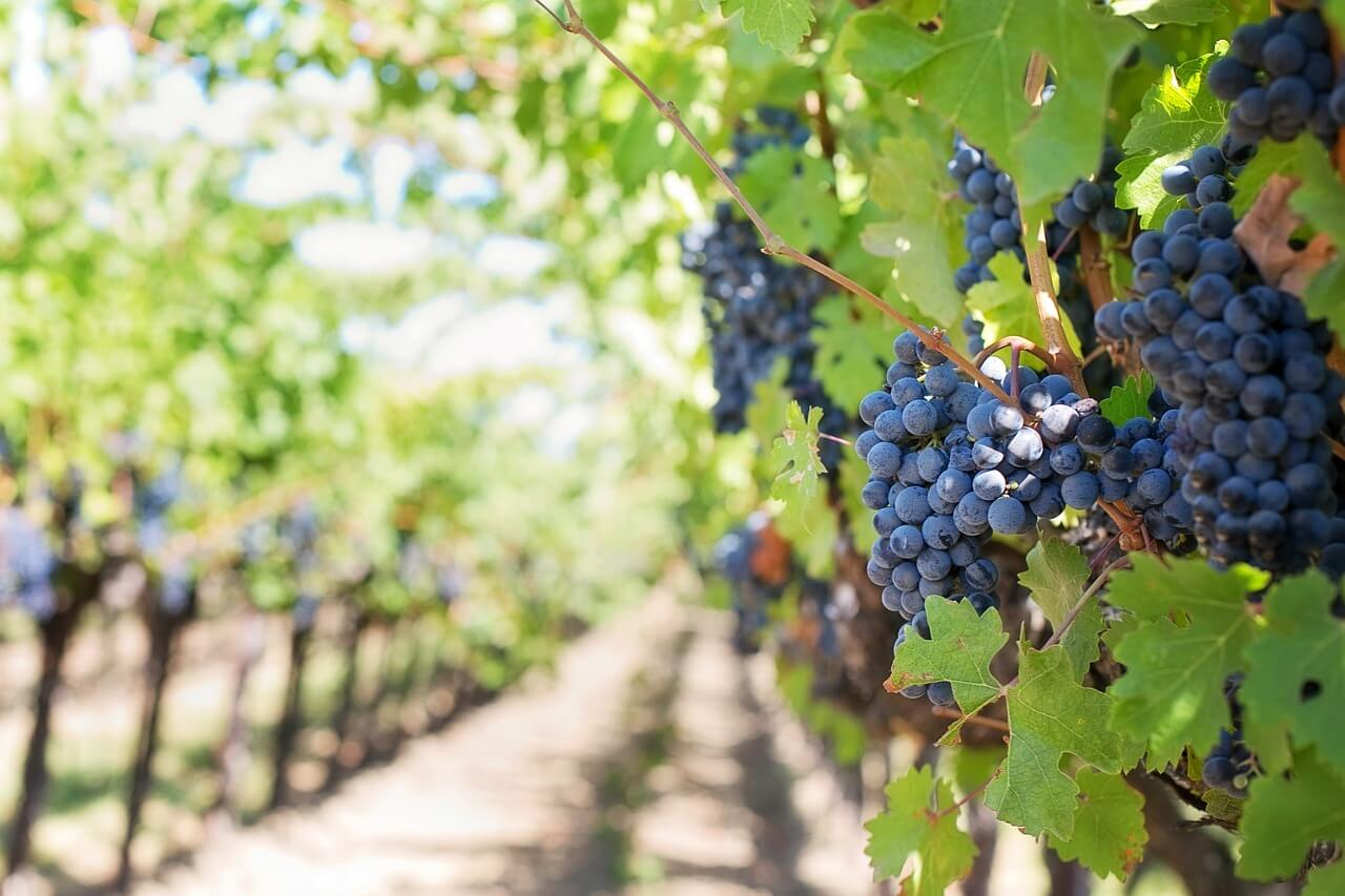 Top locaties voor een wijnvakantie