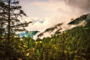 De bossen van Liechtenstein