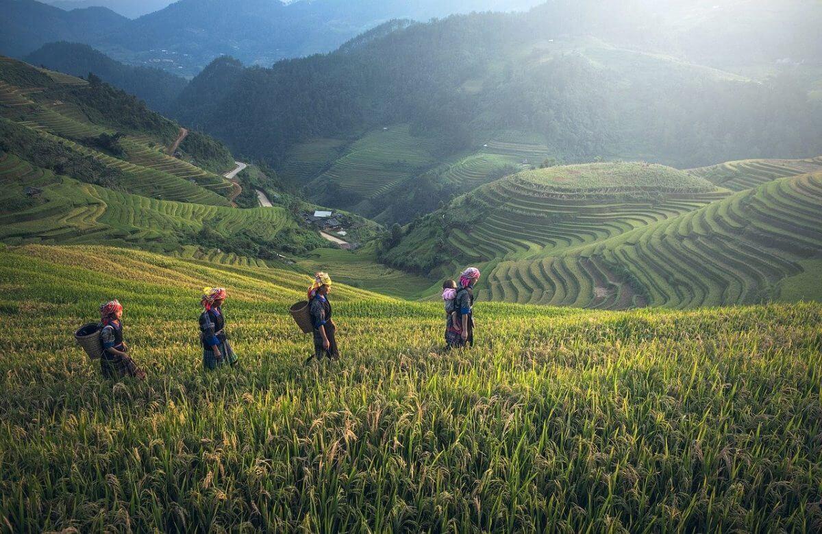 rijstvelden op bergen