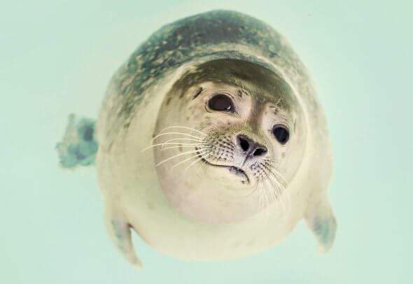 A Seal in Stellendam.