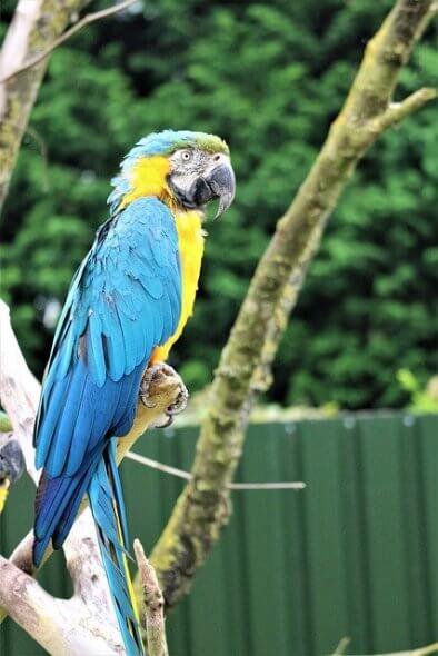 Papegaai meenemen op vakantie
